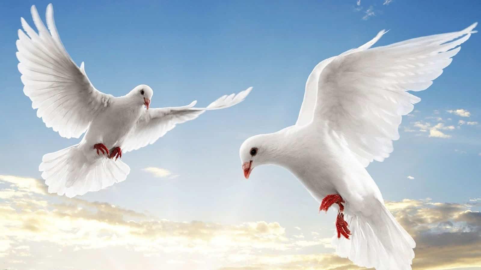 Chiem bao thay chim danh con gi